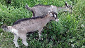 Wild Orchid Farm: Little Ones