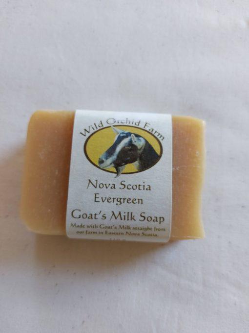 Nova Scotia Evergreen Goat's Milk Soap